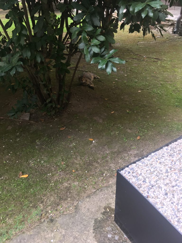 Cat lounging at Ospedale tree site